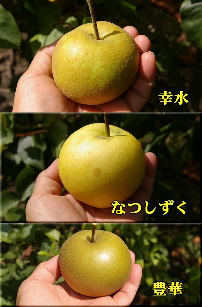1ko_na_yu150810_009.jpg