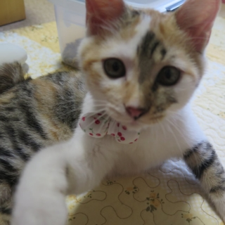 150819_cat02.jpg