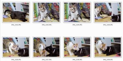 150819_cat03.jpg