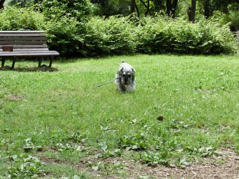 木場公園にてウィル