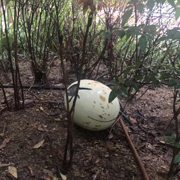 ちょっと見つけにくい、隠しアイテム的な「恐竜の卵」。