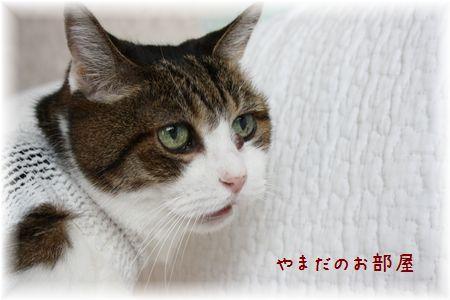 2015.817のスーちゃん②