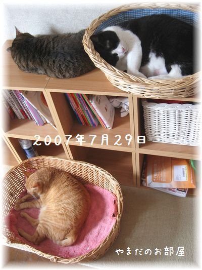 2007.7.29の3ニャン