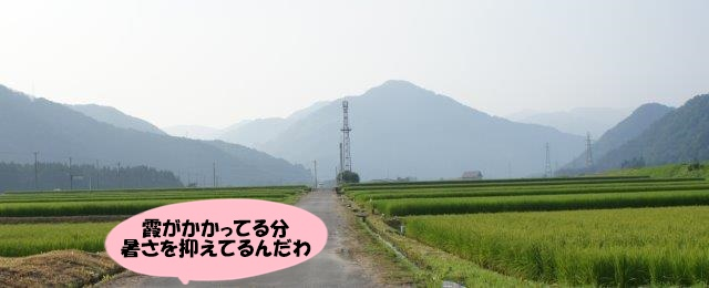 DSC07080.jpg