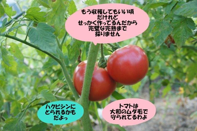 DSC07177.jpg