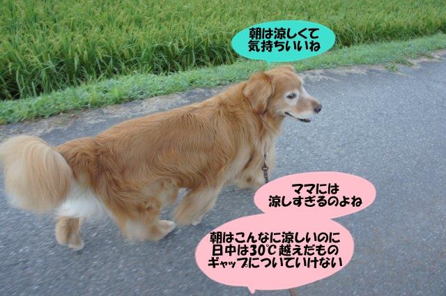 DSC07184.jpg
