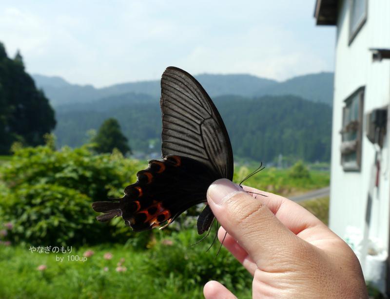 2015年8月6日撮影 新潟県7