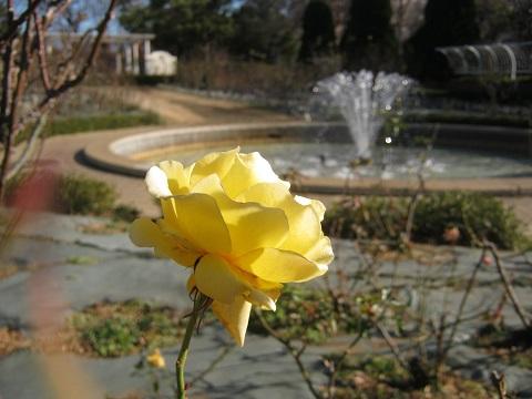 flowergarden150112-101.jpg