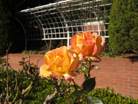 flowergarden150112-102.jpg