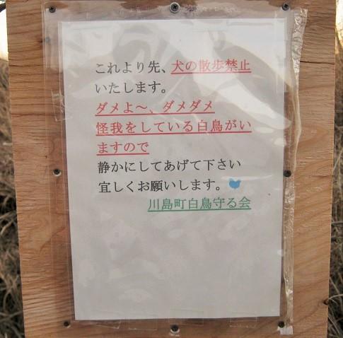 kawazima150201-104.jpg