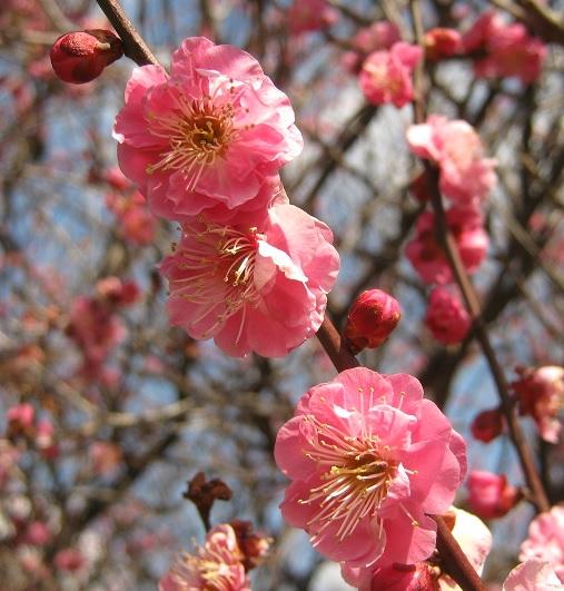 koshigaya150221-104.jpg
