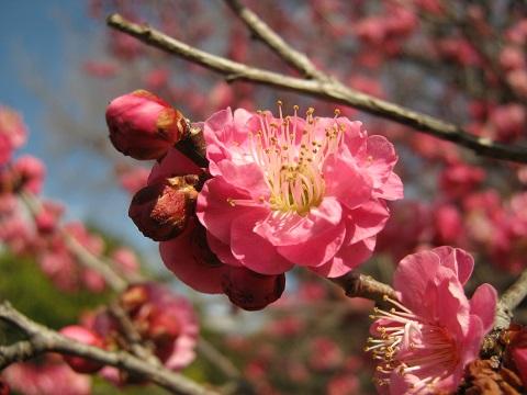 koshigaya150221-107.jpg