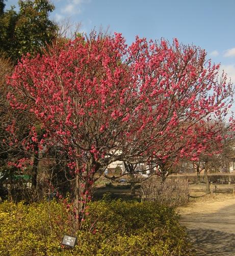 koshigaya150221-109.jpg