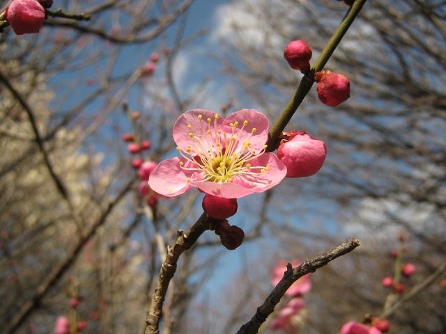koshigaya150221-111.jpg
