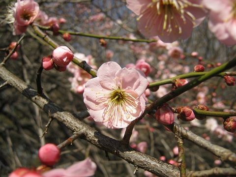 koshigaya150221-112.jpg