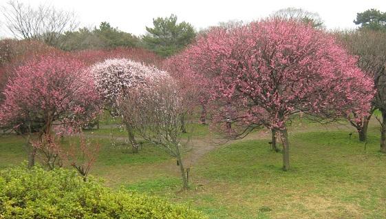 koshigaya150307-103.jpg