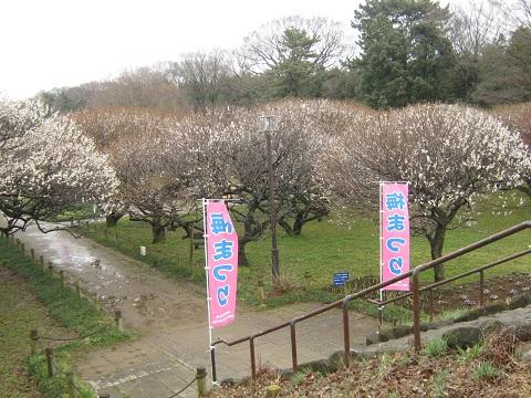 koshigaya150307-104.jpg