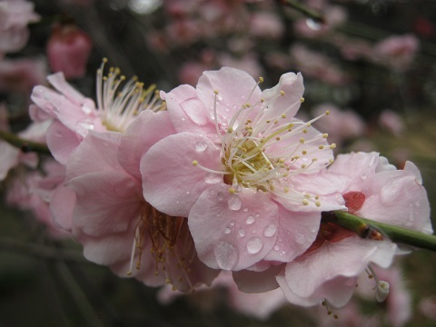 koshigaya150307-108.jpg