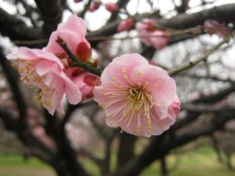 koshigaya150307-111.jpg