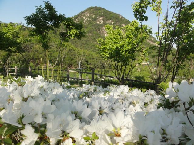 2013年5月16日 詩人の丘からの風景―山とつつじ