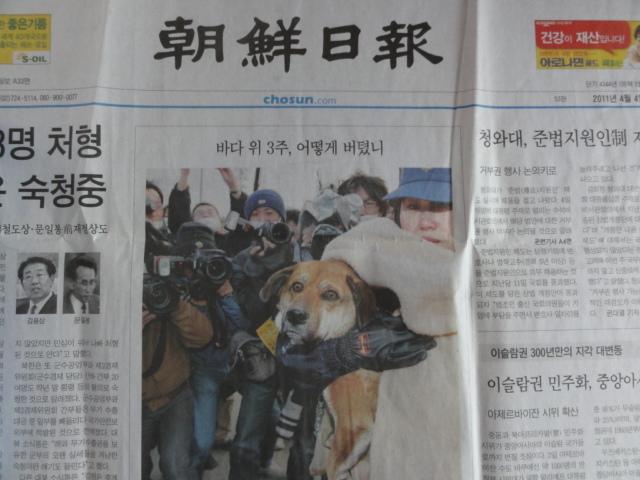 2015年3月9日撮影 2011年4月4日朝鮮日報 「奇跡の犬」1面