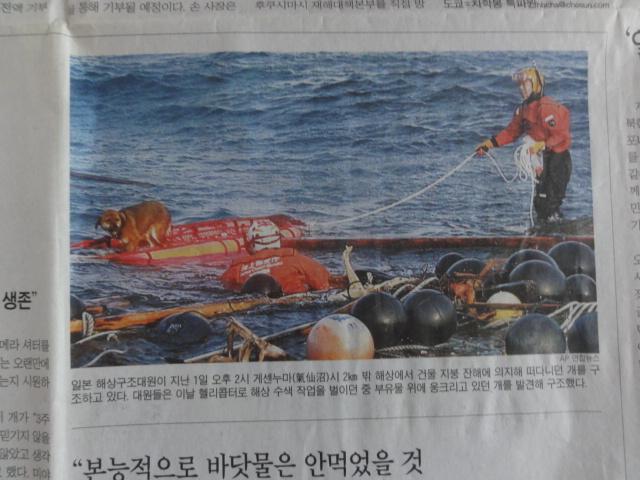 2015年3月9日撮影 2011年4月4日朝鮮日報 「奇跡の犬」2面詳報