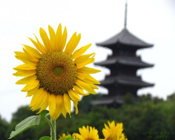 壁紙 9350向日葵と五重塔1280×1024