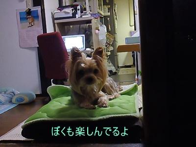 P1130756.jpg