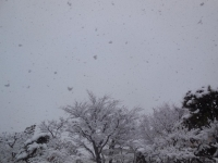 H270215去年と同じに大雪 (2)