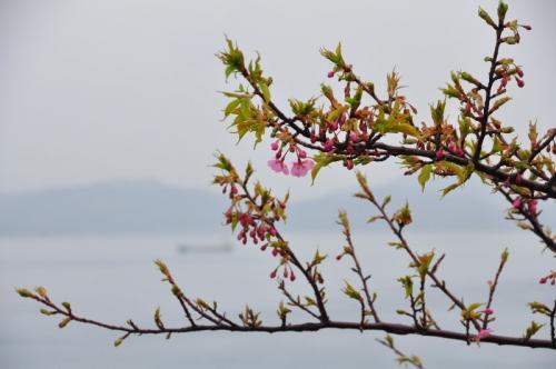 2大角海浜公園15.02.24