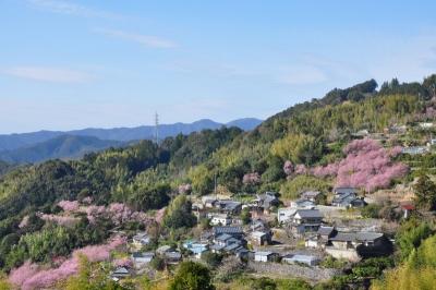 2桑田山15.03.05