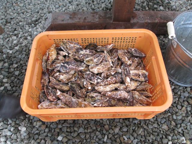 牡蠣ツアー 076
