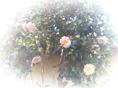 fc2blog_20150224185241bd7.jpg