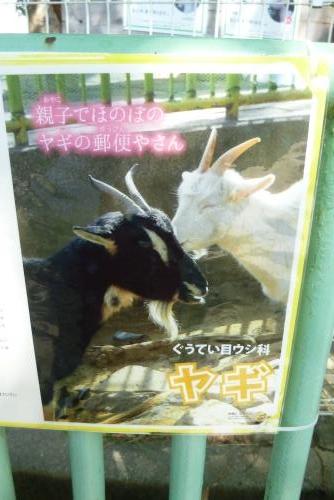 お城の動物園 ヤギ