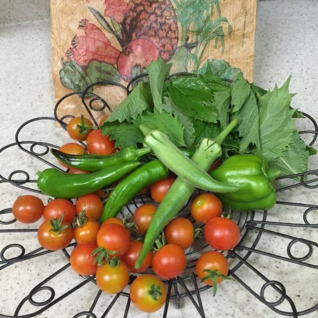 平成27年08月04日YYガーデンの野菜