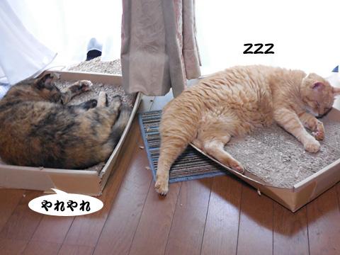 15_07_09_1.jpg