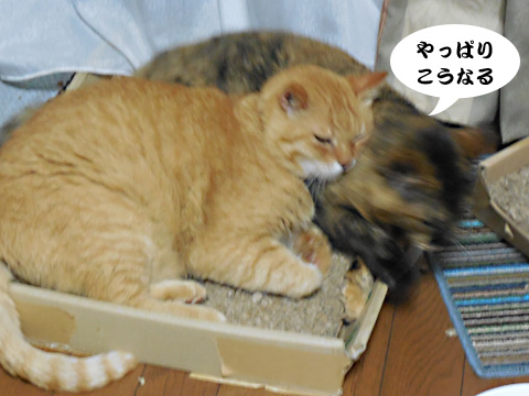 15_07_09_4.jpg