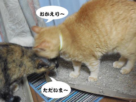 15_07_09_6.jpg
