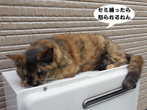 15_07_11_7.jpg