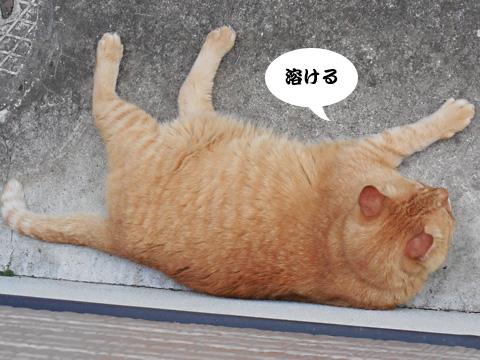 15_07_15_2.jpg