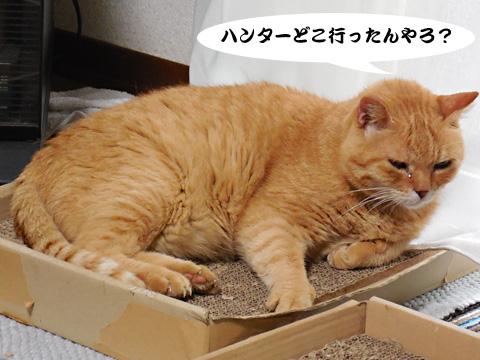 15_07_19_1.jpg