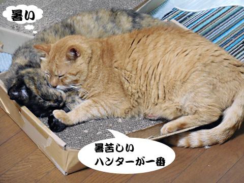 15_07_19_5.jpg