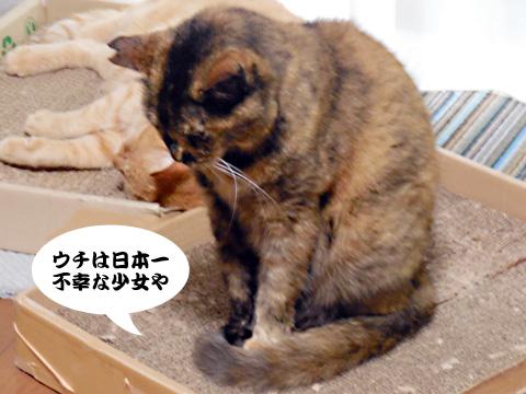 15_07_19_6.jpg
