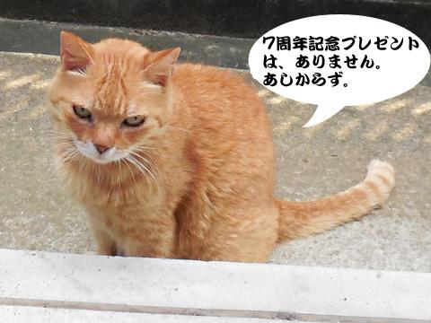 15_07_21_8.jpg