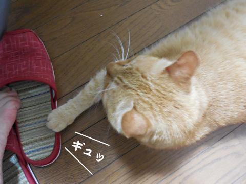15_07_23_1.jpg