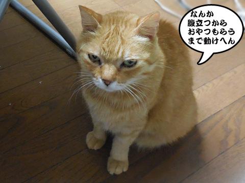 15_07_23_3.jpg