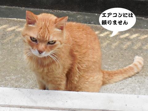15_07_29_2.jpg