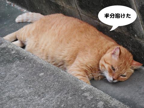15_08_02_1.jpg