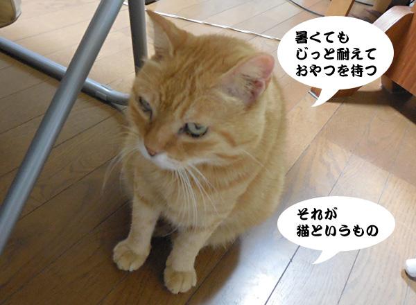 15_08_04_4.jpg