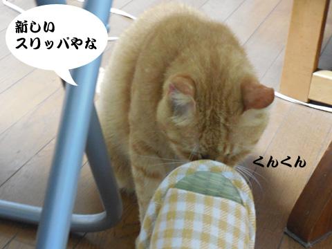 15_08_06_1.jpg